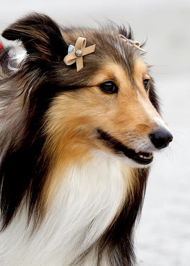 Dogshow_33_2