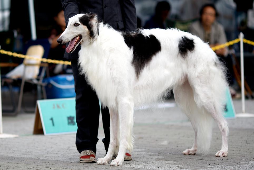Dogshow_1_2