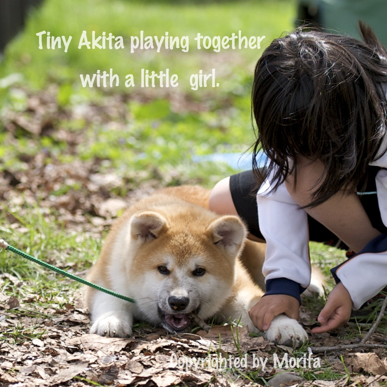 Akita5