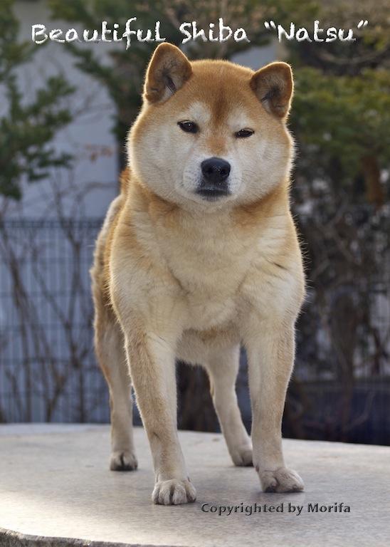 Shibanatsu