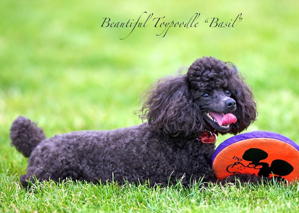 Basil3
